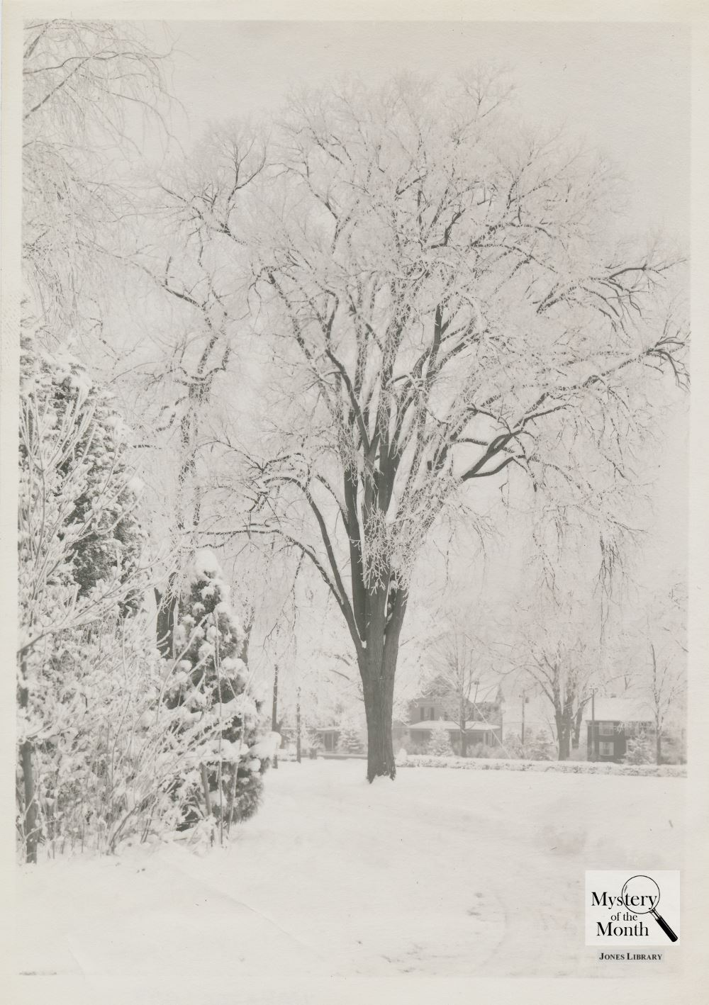 Mystery of the Month - Image of a tree covered in snow