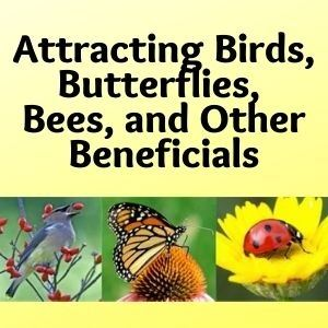 Attracting Birds, Butterflies, Bees, and Other Beneficials