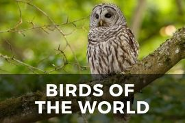 Free Access to Birds of the World
